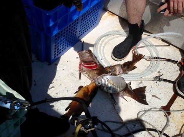 תפיסת דייגים שדגו באמצעות מיכלי אוויר