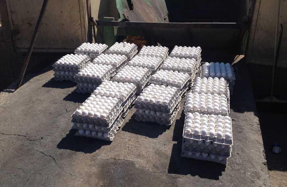 לא מתאימות לאכילה. ביצים שנתפסו (צילום: דוברות עיריית עכו)