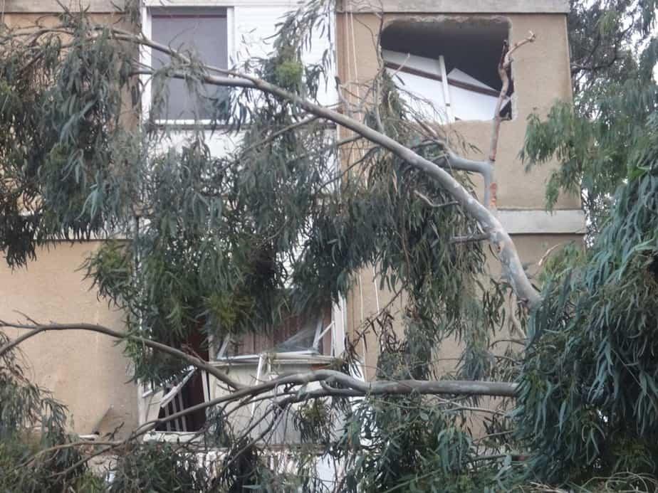 העץ שפגע במרפסת הדירה  (צילום: הילה מלמד)