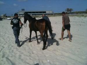 החרמת סוסים בחוף הפתוח בעכו