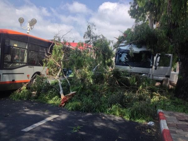 עץ קרס על מכוניות בשדרות הגעתון