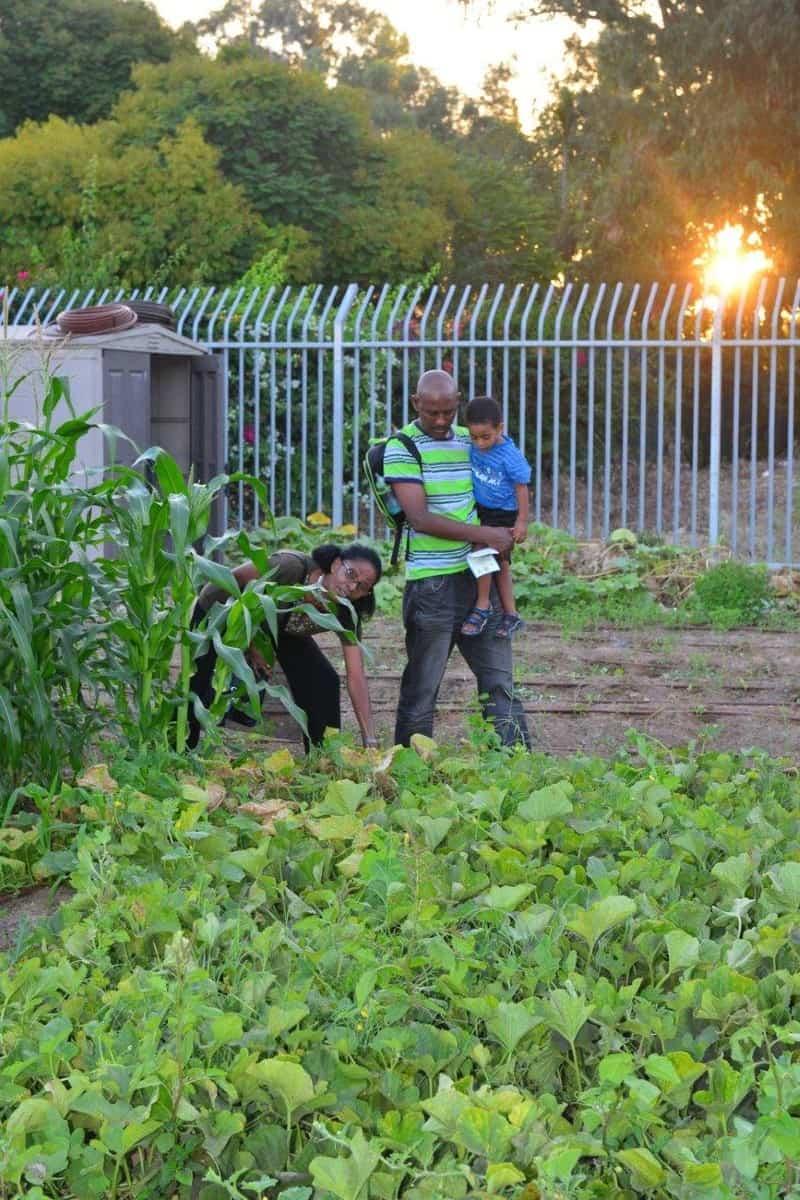 הגינה הקהילתית בקרית חיים