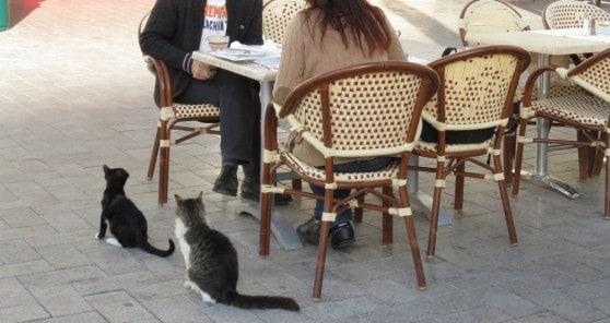 חתולים משוטטים בין המסעדות (צילום: רותי ברמן)