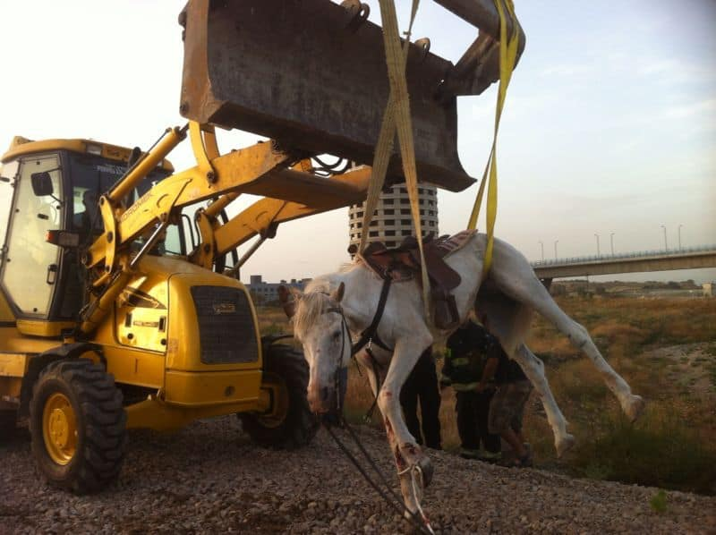 סוס שחולץ משריפה בכפר מסריק