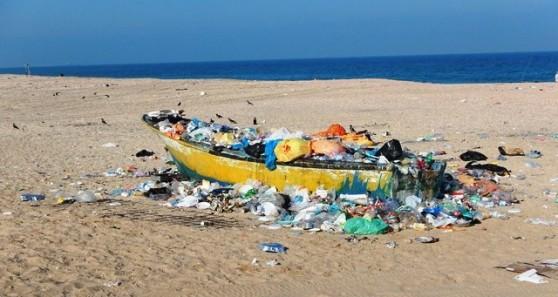 צילום: דרור אריאלי, המשרד להגנת הסביבה, אגף ים וחופים
