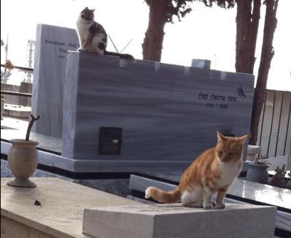 החתולים על הקברים. בית העלמין בנצרת עלית (צילום: יצחק סולומון)