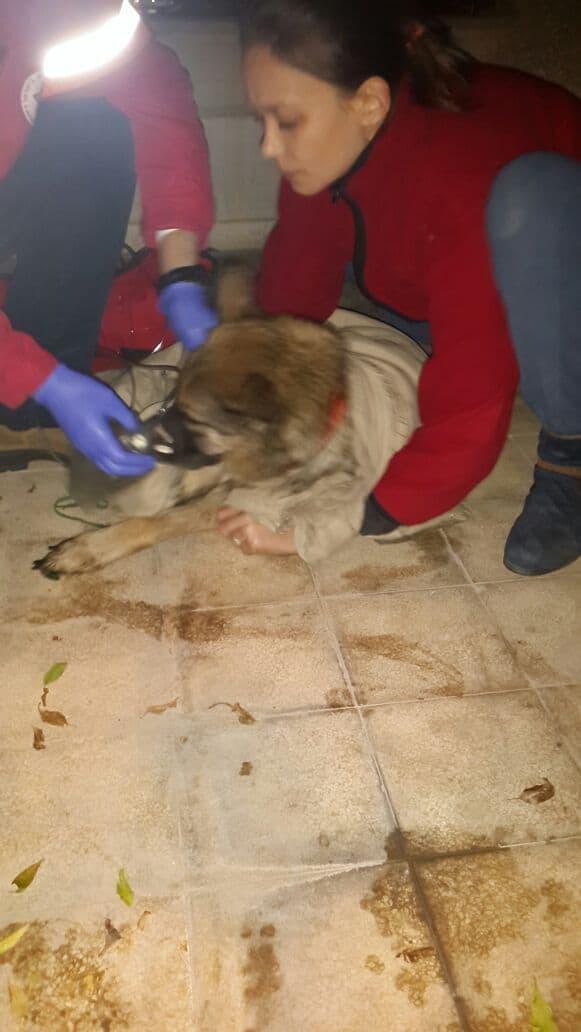 הכלבה חולצה בשלום (צילום: דוברות כבאות והצלה)