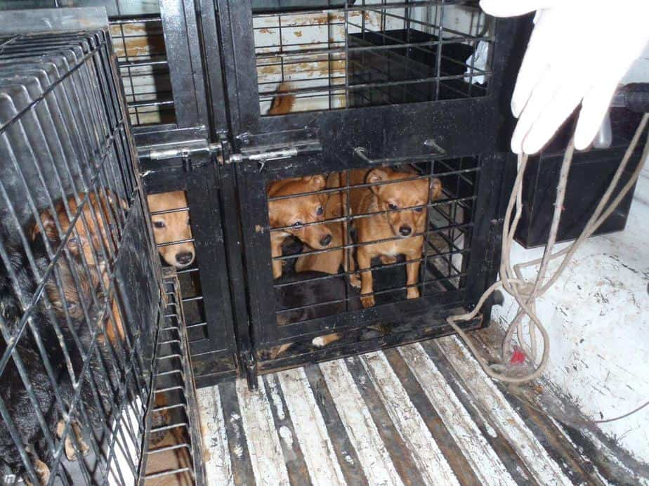 הכלבים שנמצאו (צילום: עיריית חיפה)
