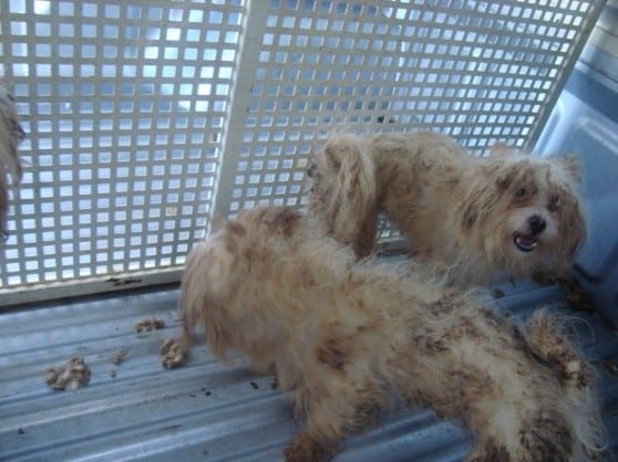 פינוי כלבים ממחסן באזור חדרה (צילום: נירית ציפורי-ברקי)