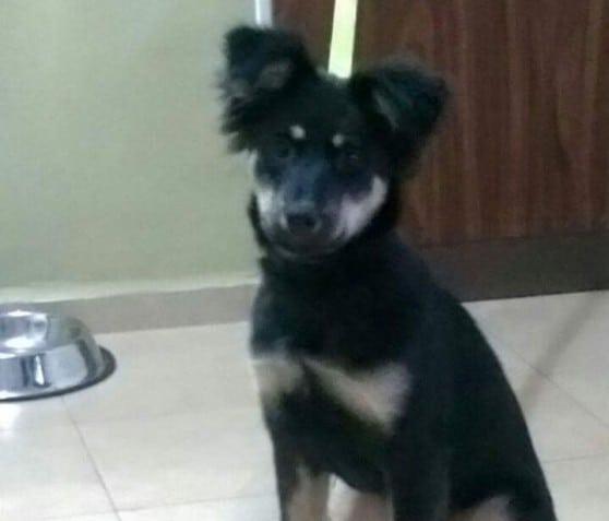באבי הכלבה (צילום: כלבלאב)