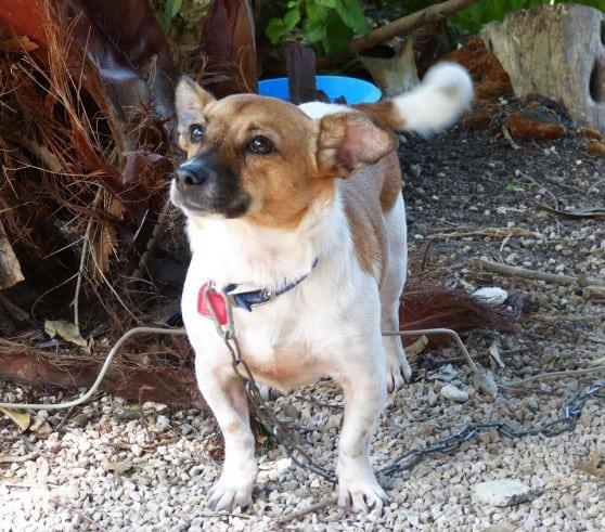 הכלבה במבי (צילום: עמותת גלבוע אוהבת חיות)