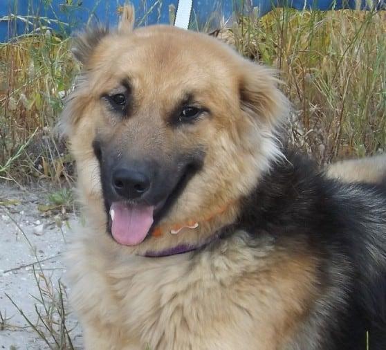 הכלבה קאטי (צילום באדיבות: צער בעלי חיים)