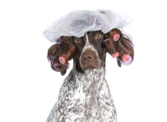חשוב לטפח את פרוות הכלב ( צילום אילוסטרציה: פנתרמדיה)