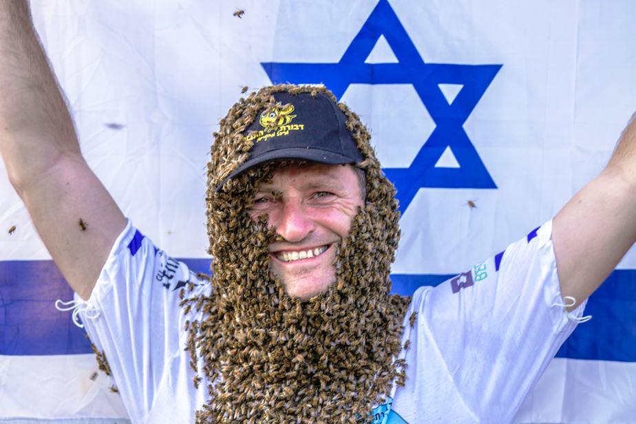 דבורת התבור (צילום: דבורת התבור)
