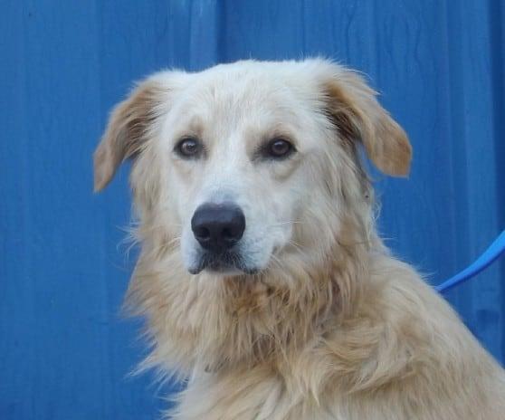 הכלב יילו (צילום: אגודת צער בעלי חיים חיפה)