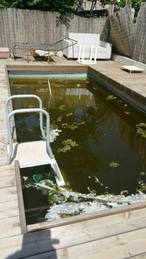 מדגרת יתושים בבריכה פרטית בצפון העיר (צילום: עיריית חדרה)