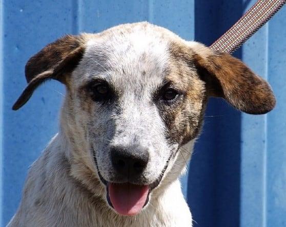 הכלבה עלמה (צילום: צער בעלי חיים)