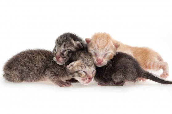 גורי חתולים (צילום אילוסטרציה: פנתרמדיה)