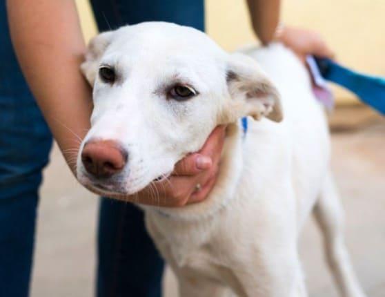 הכלבה שילגי (צילום: עמותת גלבוע)