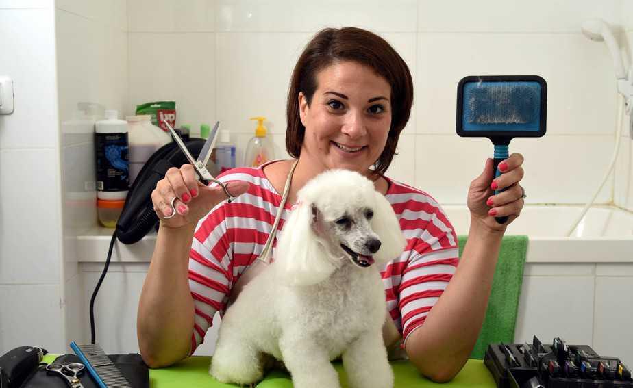 מעצבת שיער לכלבים. טל טגליאריני (צילום דורון גולן)