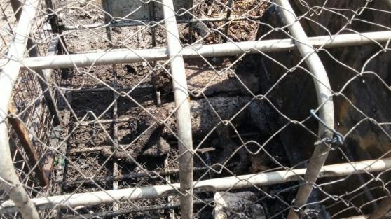 כלב אמסטף שרוף בכלוב  (צילום: כיבוי אש מחוז חוף)