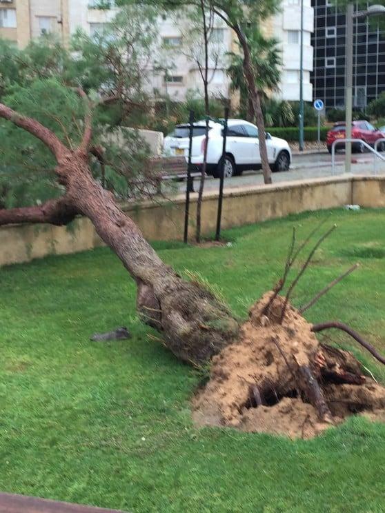 עץ ברמת פולג צילום קתרין שקרק