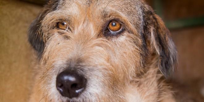 הכלבה טורי (צילום: עמותת תנו לחיות לחיות)