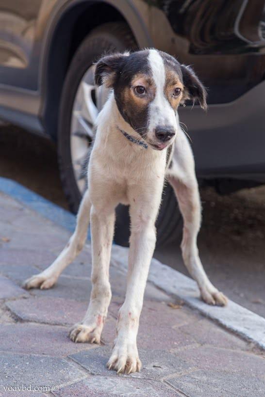 הכלב עופריקי צילום : יואב בן דב