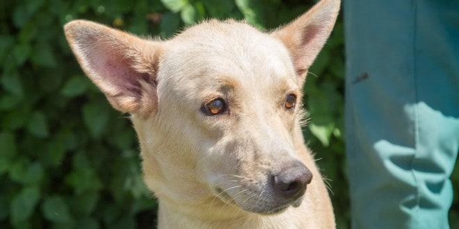 הכלב פנג (צילום: עמותת תנו לחיות לחיות)