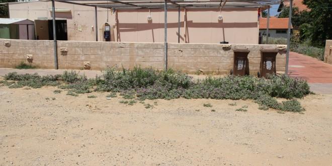 בית הכנסת קהילת יעקב. הכל בגללו? (צילום: שלומי גבאי)