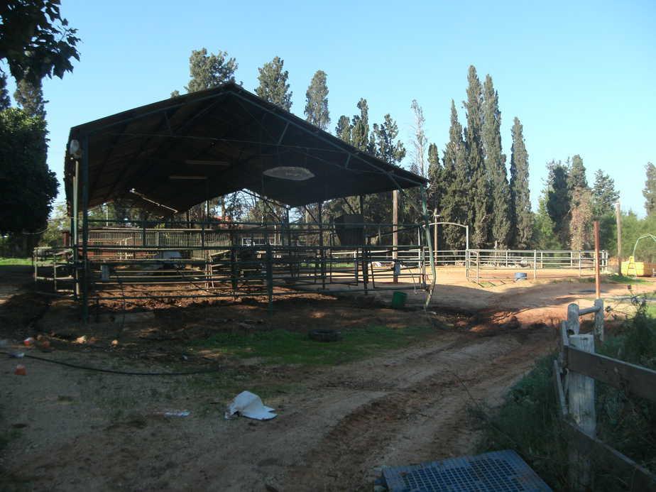 החווה הנטושה השבוע (צילומים: נירית שפאץ)