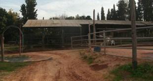 חוות שילובים נטושה השבוע (צילום: נירית שפאץ)