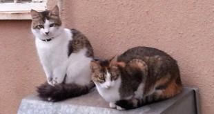 חתולים (צילום עצמי)