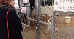 """המקום קולט יותר מ~1000 כלבים בשנה. ח""""כ גרמן בביקור בכלבייה (צילום: פרטי)"""