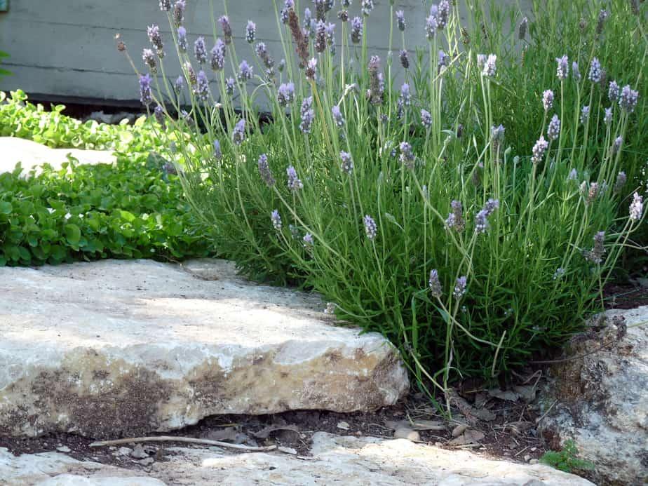 חלון לים התיכון. מדרגות אבן מתחברות לצמחיה בגינה של מיכל אליאב. צילום: מיכל אליאב