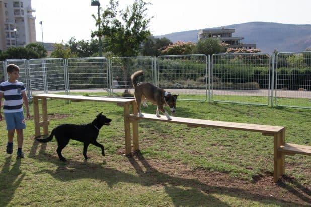 פארק כלבים. צילום: אלכס הובר