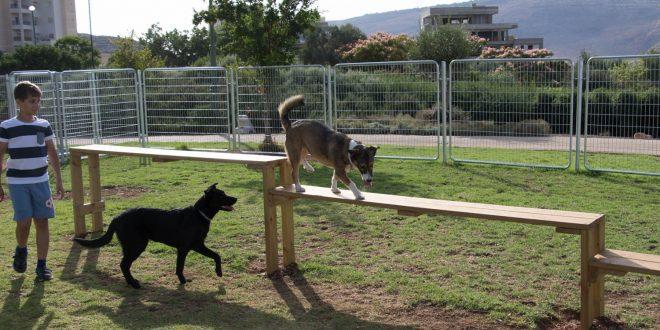 פארק כלבים בשכונת רבין בכרמיאל צילום אלכס הובר