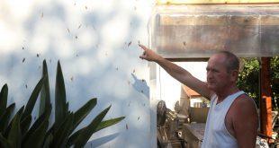 ניסן ברנשטיין במרפסת ביתו עם הלכלוך על הקירצילום: שלומי גבאי