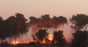 אש בפארק העירוני (צילום אריה ציליק)