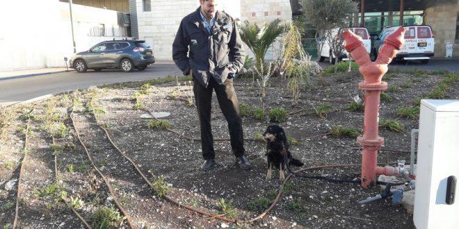 הכלב מחכה לבעליו מחוץ למיון. צילום: בית חולים זיו