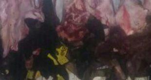 חלק מההבשר שהוחרם (צילום דוברות המשטרה)