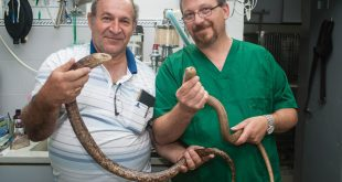 "ד""ר פביאן בן זקן ושמואל בראונשטיין מחזיקים קמטן. צילום: דורון גולן"