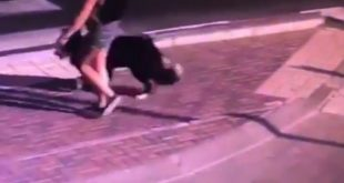 נהריה: שוטרים איתרו כלב שנשך ילד ביום כיפור והצילו את חייו מחיסון כלבת