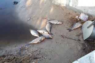 זיהום בנחל אלכסנדר (צילום: רן פרחי רשות ניקוז)