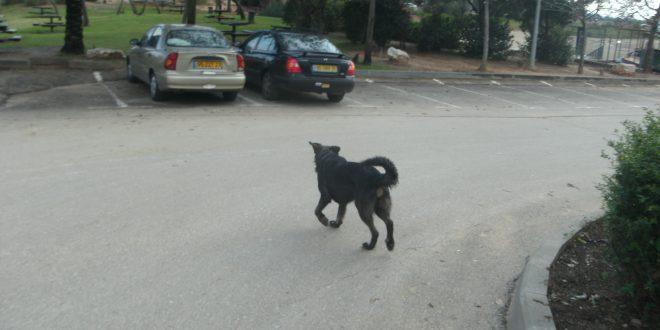 כלב (צילום: נירית שפאץ)
