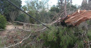 עץ שנפל על קו מתח בפרדס חנה והפסיק את החשמל בשכונה באחד החורפים האחרונים (צילום: נירית שפאץ)