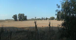 חלק מהשטח המיועד לבניית פרויקט הטריז (צילום: נירית שפאץ)