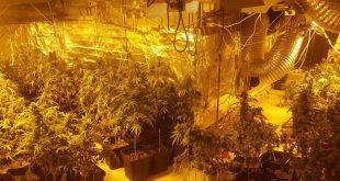 הסמים שנתפסו באיכסאל (צילום דוברות המשטרה)