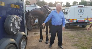 פלוט והסוס (צילום עצמי)