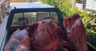 בשר שהוחרם (צילום דוברות המשטרה)